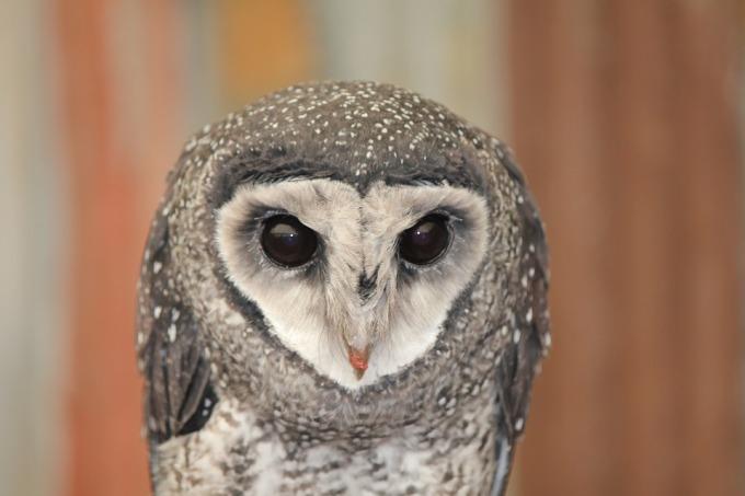 owl-1139741_960_720